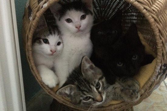 katte-dyreklinik-01-min